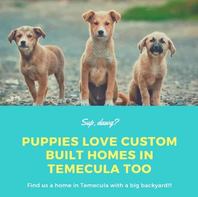 Puppies Custom built homes for sale in Temecula